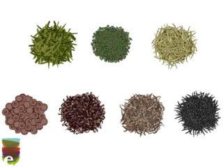 Conosci i 6 diversi tipi di tè?