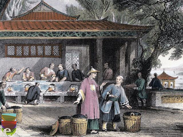 Robert Fortune, la spia del tè