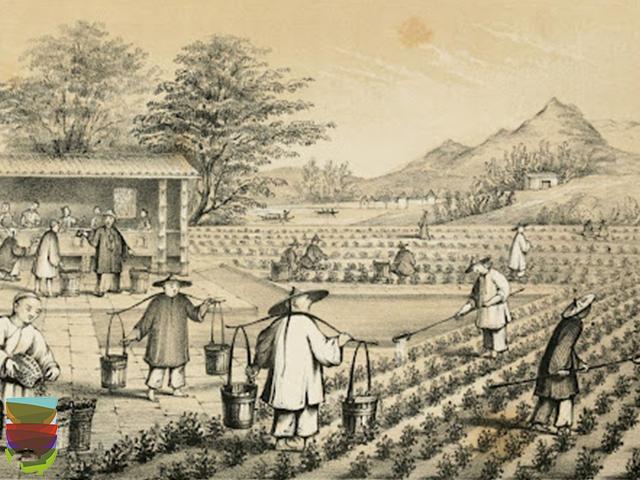 You are currently viewing Leggende sulla nascita del tè